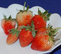 プランターでイチゴ 収穫